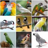 دفعة جديدة طيور زينة منوعة وببغاوات ومستلزمات