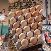 للبيع بيض دجاج بلدي للاكل و التفقيس