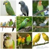 طيور زينة وببغاوات وجميع مستلزماتها وأكلها