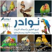 طيور حب طيور كناري طيور زبرا ومستلزماتها