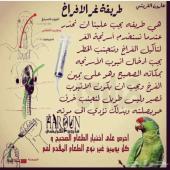 للطيور معلومات