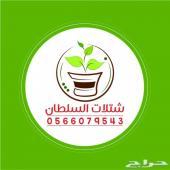 شتلات السلطان - 0566079543