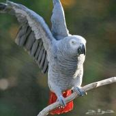 خدمة ترويض وفندقة الطيور