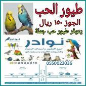 ذكور كناري الوحد 200 ريال طيور حب الجوز 150