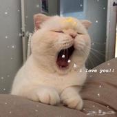 ترويش قطط