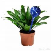 طريقة مبتكرة لسقيا النبات المنزلي