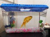 سمكة زينة مع صندوقها وفلتر البيع سمح