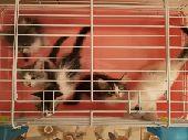 قطط البيع ((المتبقي 4 فقط))