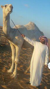 جنوب محافظة العويقبله