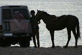 الحصان عربي شعبي