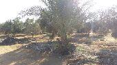 مزرعة رائعة فى مصر