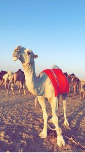 الرياض -   قعود  كفوووووو
