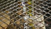 طيور بادجي  (طيور الحب ) بسكاكا