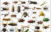 شركة مكافحة حشرات وعزل خزانات ضددالتسريب بمكه