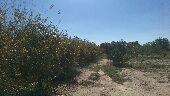 مزرعه للبيع بالسيل الكبير بجوار الميقات