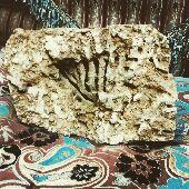 احجار- حجر عليه اسم الله بلشعب المرجانية