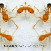 شركة مكافحة النمل الأبيض مع الضمان 0550504670