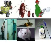 شركة مكافحة حشرات والقضاء عليها نهائيا