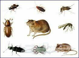 »  الصفا لمكافحة الحشرات