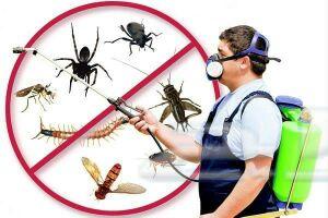 شركة مكافحة حشرات رش مبيدات الصراصير الفئران