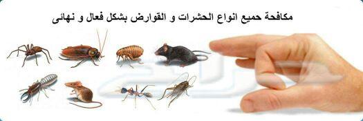 شركة المجد للنظافة ومكافحة الحشرات